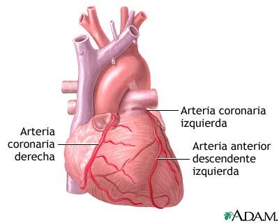 MedlinePlus Enciclopedia Médica: Cirugía de derivación cardíaca ...