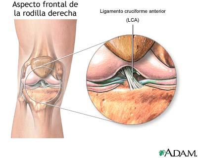 MedlinePlus Enciclopedia Médica: Anatomía de una rodilla normal