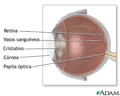 MedlinePlus Enciclopedia Médica: Anatomía lateral del ojo